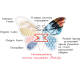 матрас Matroluxe Butterfly / Батерфляй